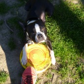 max and his frisbee